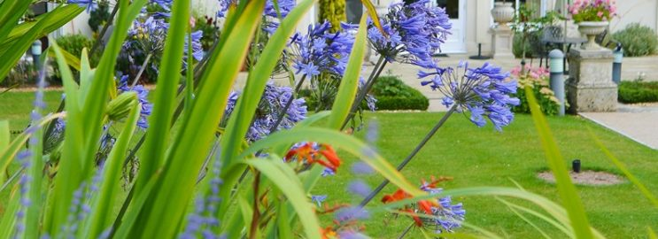 Inglewood rostliny