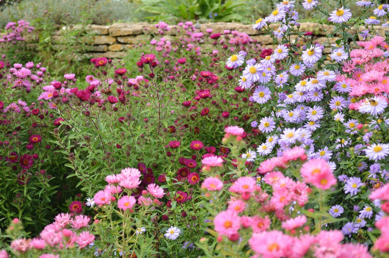 DesignSpace zahradní design