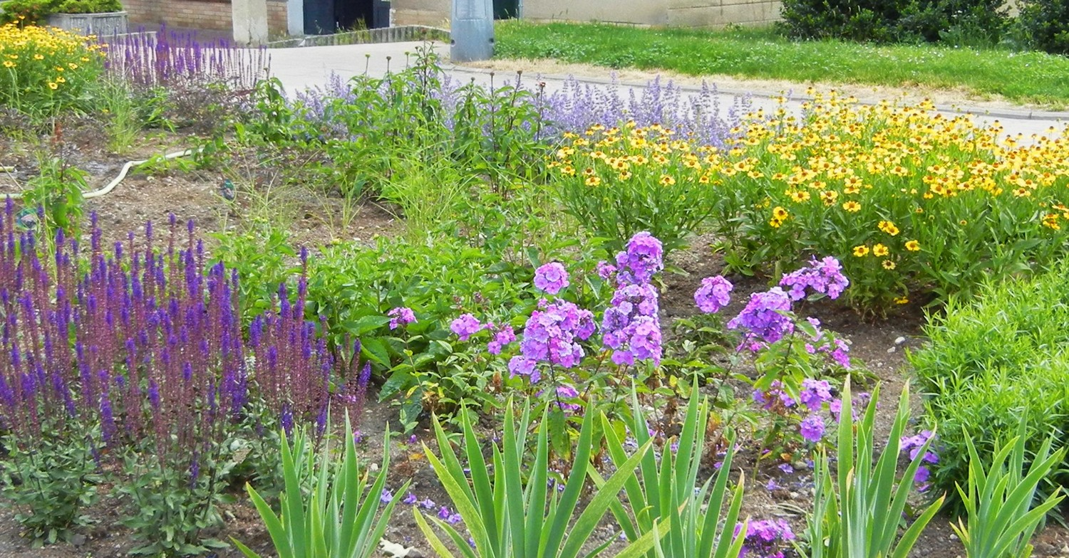 Herbaceous border is dominated by blue, purple and yellow shades in the summer.